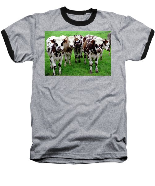 Baseball T-Shirt featuring the photograph Cow Group by Frank DiMarco