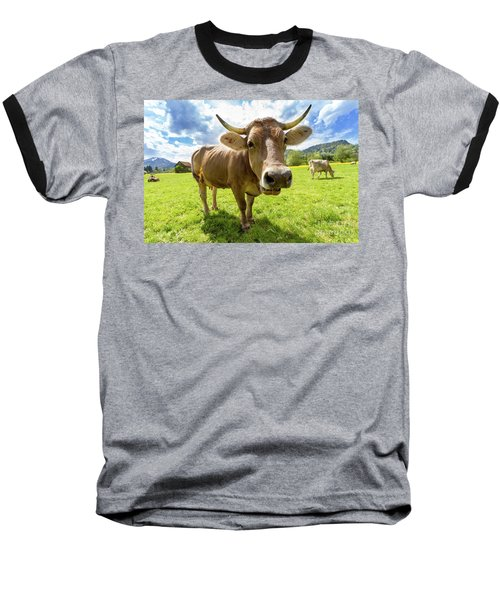 Baseball T-Shirt featuring the photograph Cow In Meadow by MGL Meiklejohn Graphics Licensing