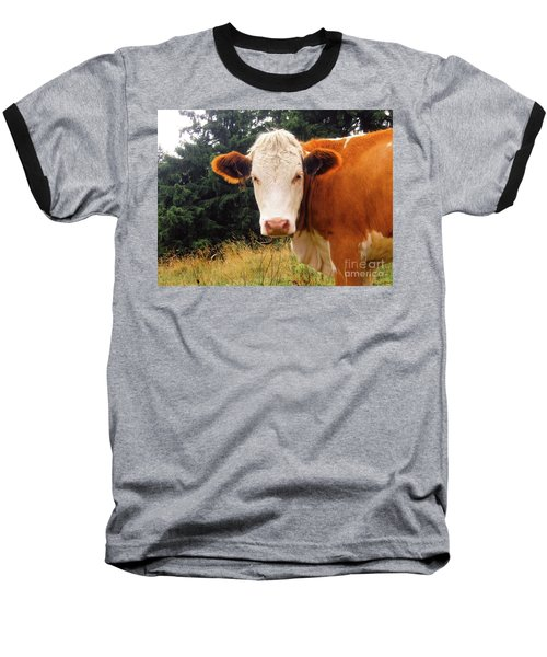 Baseball T-Shirt featuring the photograph Cow In Pasture by MGL Meiklejohn Graphics Licensing