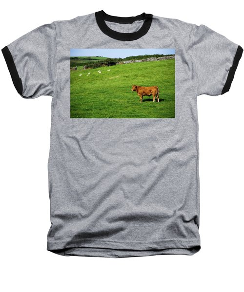 Cow In Pasture Baseball T-Shirt