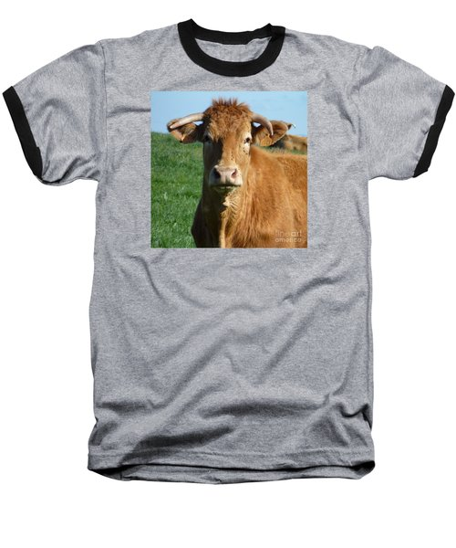 Cow Portrait Baseball T-Shirt