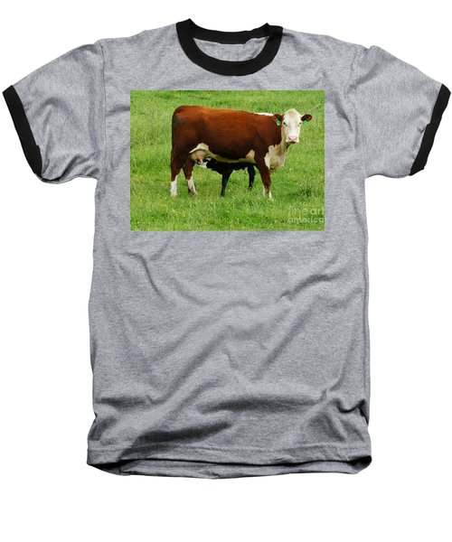 Cow With Calf Baseball T-Shirt by Debra Crank