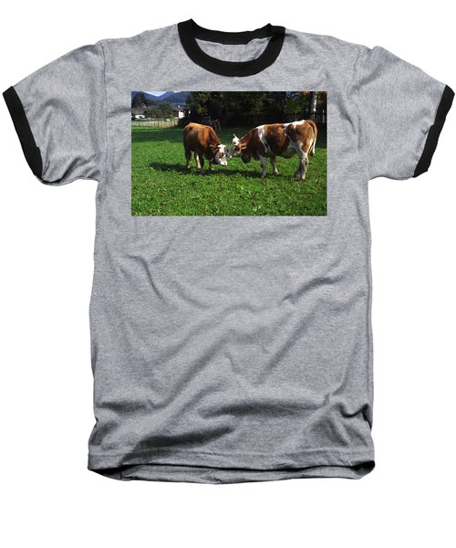 Cows Nuzzling Baseball T-Shirt by Sally Weigand