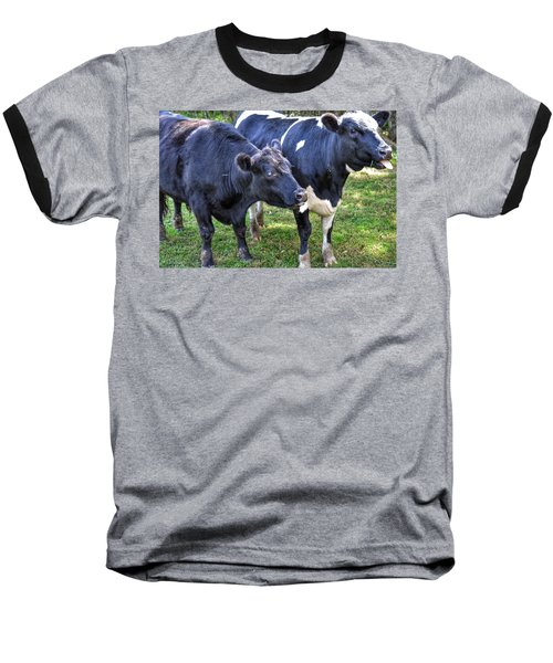 Cows Sticking Out Tongues Baseball T-Shirt