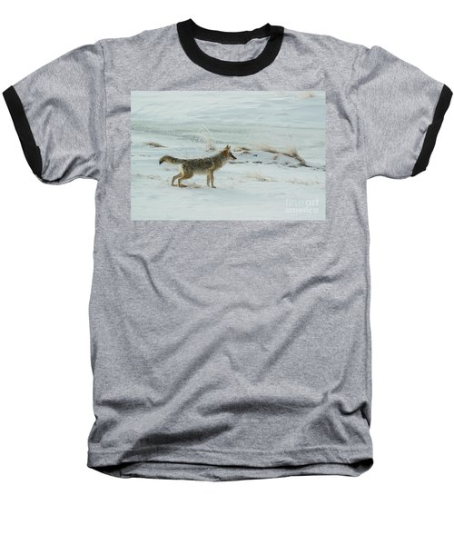 Coyote - 8962 Baseball T-Shirt