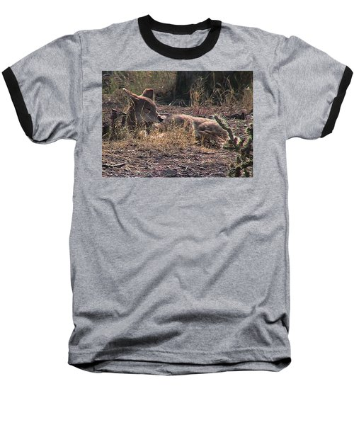 Resting Coyote Baseball T-Shirt