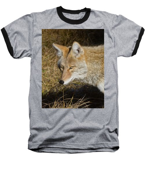 Coyote In The Wild Baseball T-Shirt