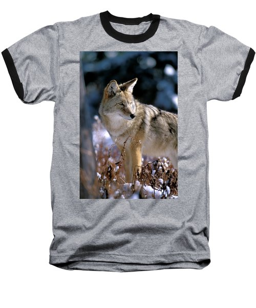 Coyote In Winter Light Baseball T-Shirt