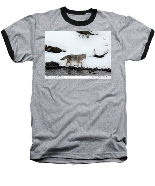 Coyote In Yellowstone National Park Baseball T-Shirt