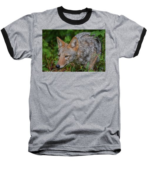 Coyote On The Hunt Baseball T-Shirt