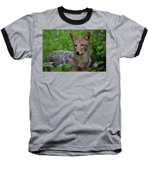 Coyote On The Prowl  Baseball T-Shirt