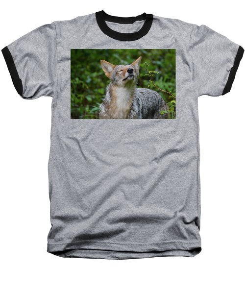 Coyote Soaking Up The Morning Sun Baseball T-Shirt