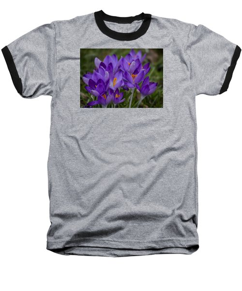 Crocus Cluster Baseball T-Shirt by Shirley Mitchell