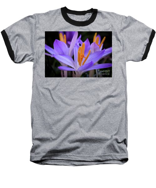 Crocus Explosion Baseball T-Shirt by Douglas Stucky