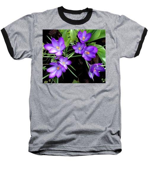 Crocus First To Bloom Baseball T-Shirt by Tara Hutton