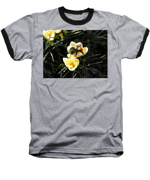 Crocus Gold Baseball T-Shirt