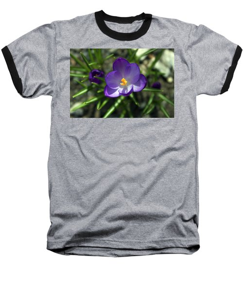 Crocus In Bloom #1 Baseball T-Shirt by Jeff Severson