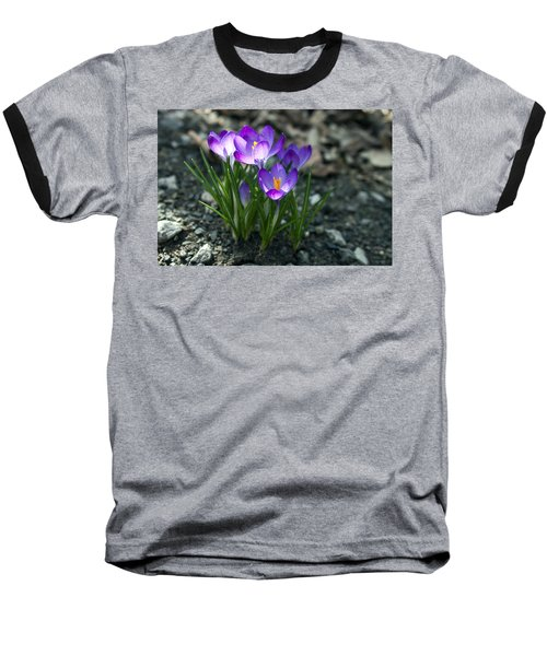Crocus In Bloom #2 Baseball T-Shirt by Jeff Severson