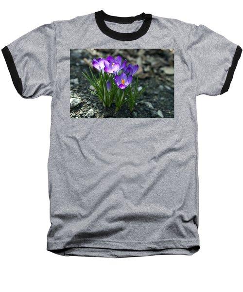Crocus In Bloom #2 Baseball T-Shirt