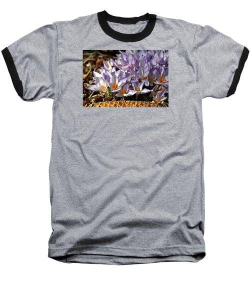 Crocuses Serenade Baseball T-Shirt by Ed  Riche