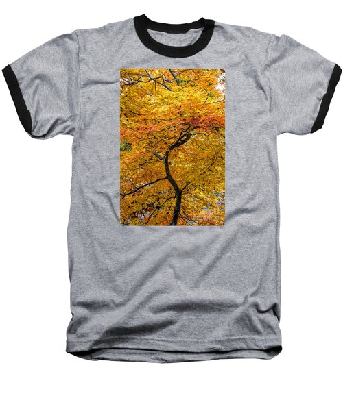 Crooked Tree Trunk Baseball T-Shirt