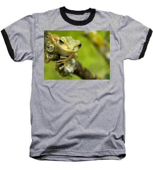 Cuban Tree Frog 000 Baseball T-Shirt by Chris Mercer