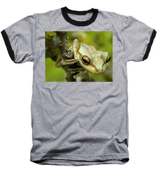 Cuban Tree Frog  Baseball T-Shirt by Chris Mercer