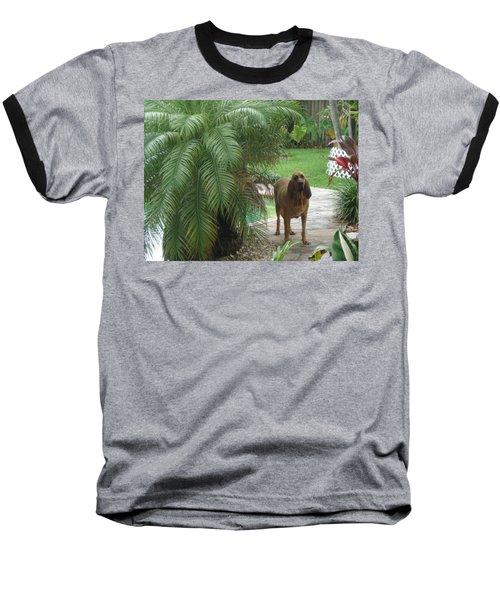 Cujo Hiding Baseball T-Shirt
