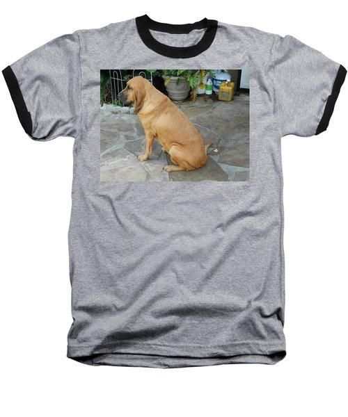 Cujo Sitting Around Baseball T-Shirt by Val Oconnor