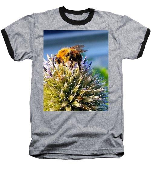 Curious Bee Baseball T-Shirt