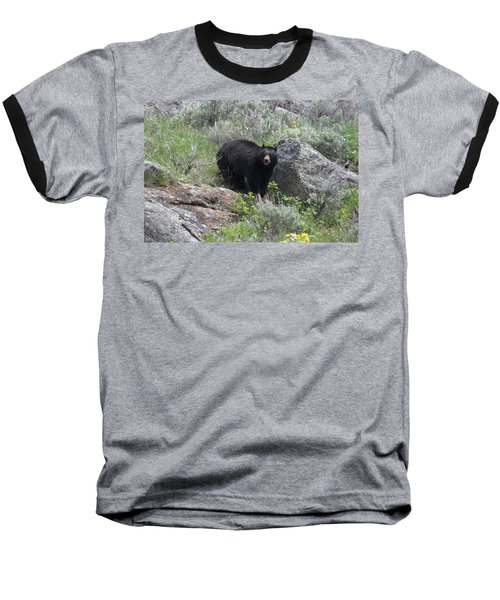 Curious Black Bear Baseball T-Shirt