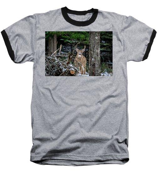 Curious Buck Baseball T-Shirt