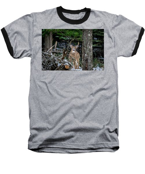 Curious Buck Baseball T-Shirt