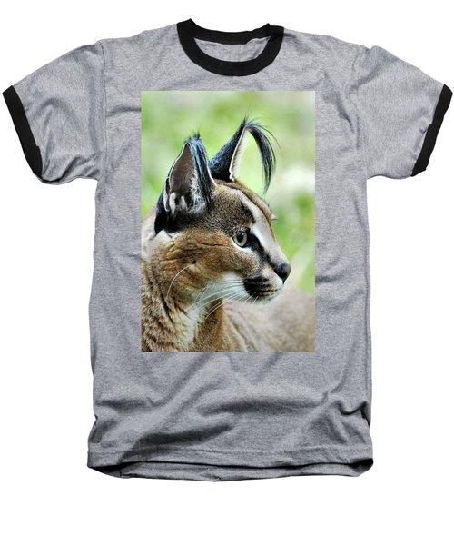 Curious Caracal Baseball T-Shirt