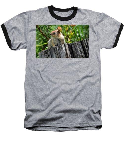 Curious Chipmunk Baseball T-Shirt by AJ Schibig