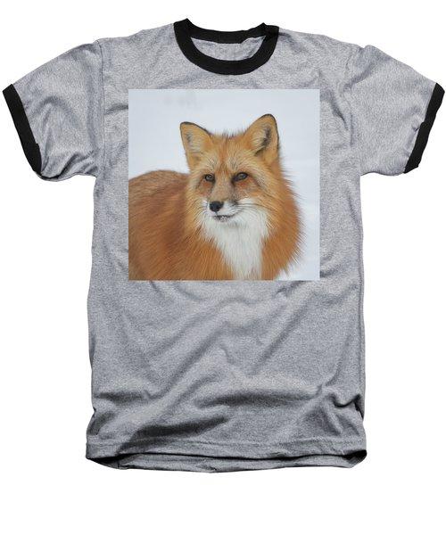 Curious Fox Baseball T-Shirt by Jack Bell