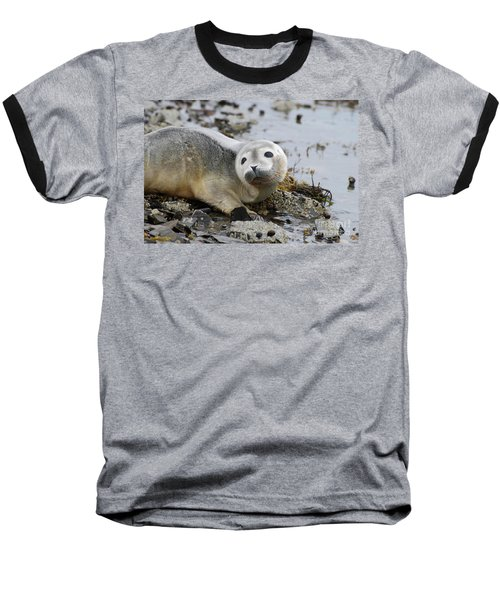 Curious Harbor Seal Pup Baseball T-Shirt by DejaVu Designs
