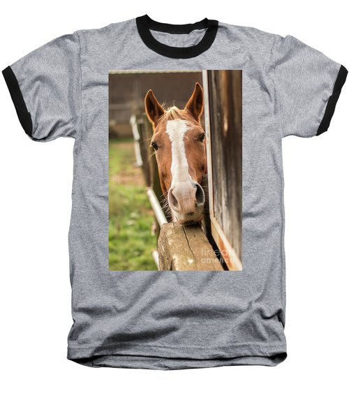 Curious Horse Baseball T-Shirt