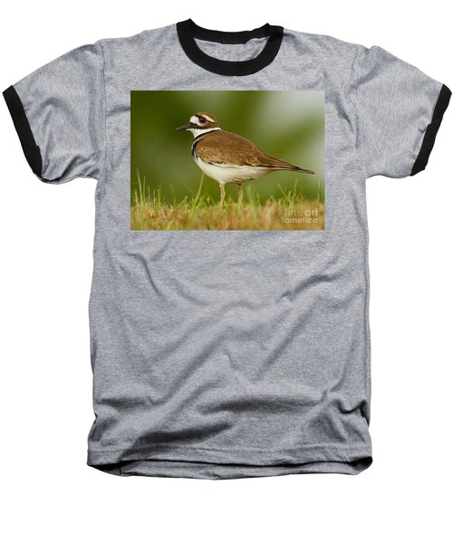 Curious Killdeer Baseball T-Shirt by Myrna Bradshaw