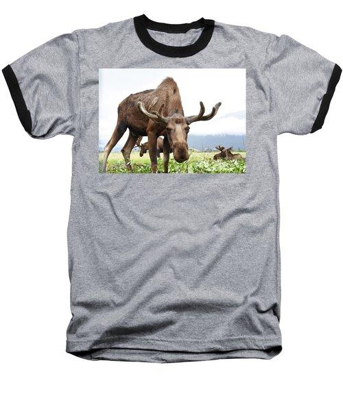 Curious Moose Baseball T-Shirt