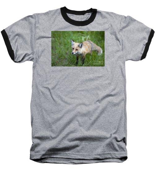 Curious Red Fox Baseball T-Shirt