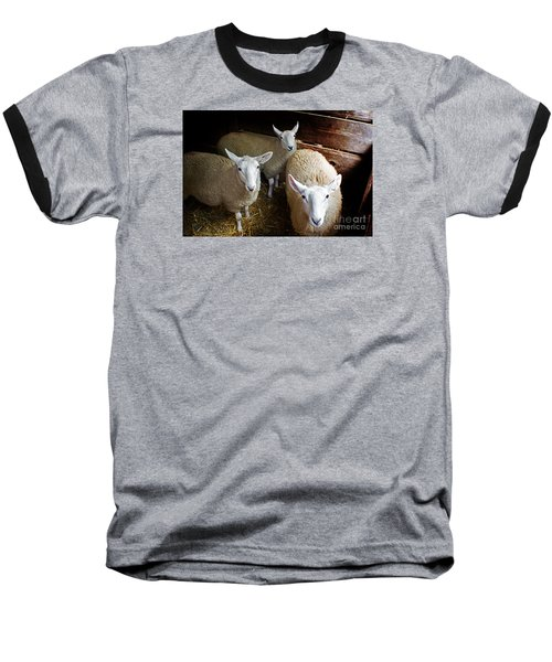 Curious Sheep Baseball T-Shirt