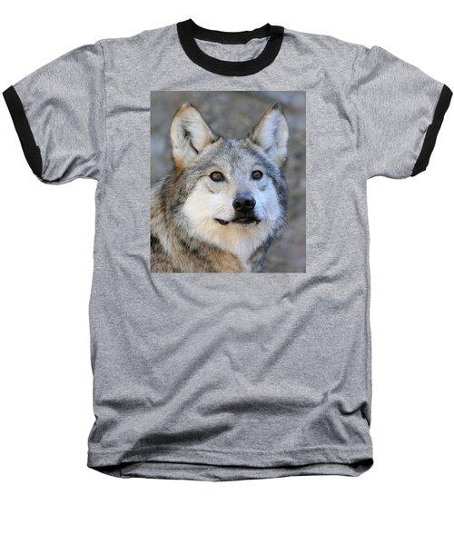 Curious Wolf Baseball T-Shirt by Elaine Malott
