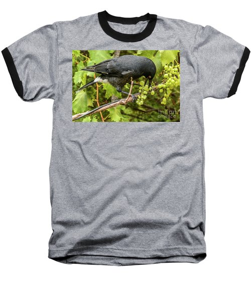 Currawong On A Vine Baseball T-Shirt