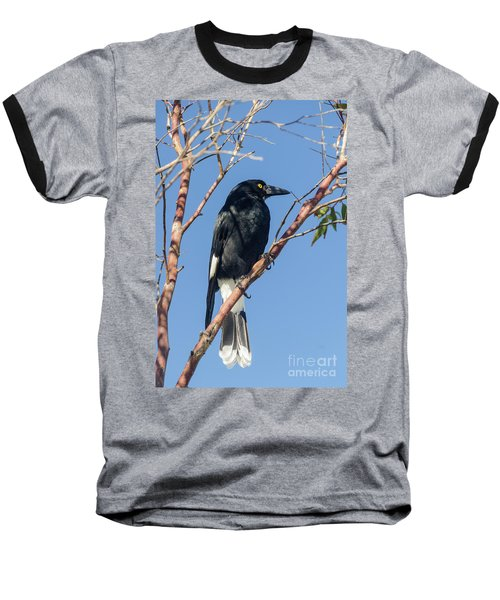 Currawong Baseball T-Shirt
