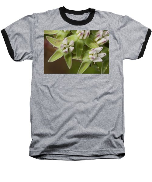 Curtiss' Milkweed #4 Baseball T-Shirt