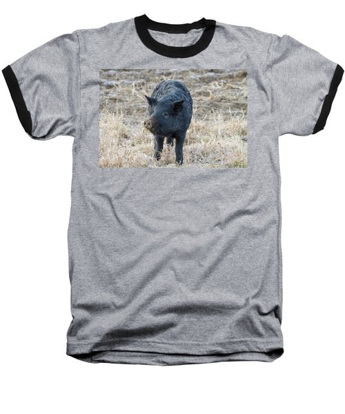 Baseball T-Shirt featuring the photograph Cute Black Pig by James BO Insogna