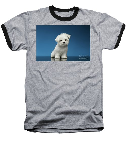 Cute Pure White Maltese Puppy Standing And Curiously Looking In Camera Isolated On Blue Background Baseball T-Shirt