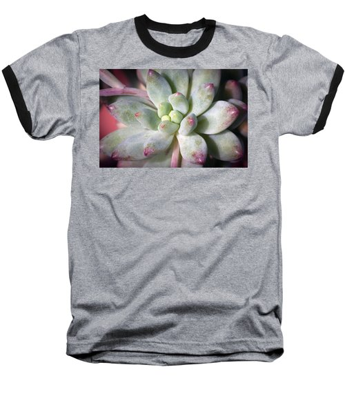 Baseball T-Shirt featuring the photograph Cute Succulent Plant by Catherine Lau