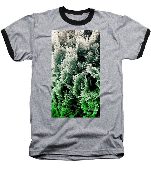 Cypress Branches No.5 Baseball T-Shirt